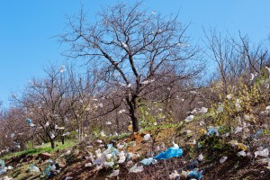 landscape with tree covered plastic bags
