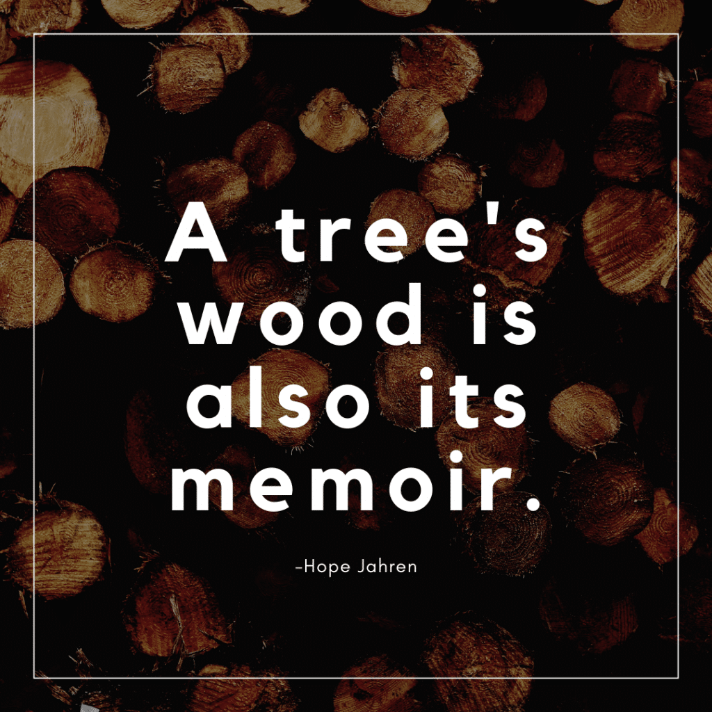 A tree's wood is also its memoir.